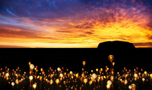 Field-of-Light-Uluru-Ayers-Rock-Resort