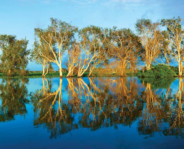 Yellow-Water-Billabong-picture-perfect-Photo-by-Paul-Arnold1