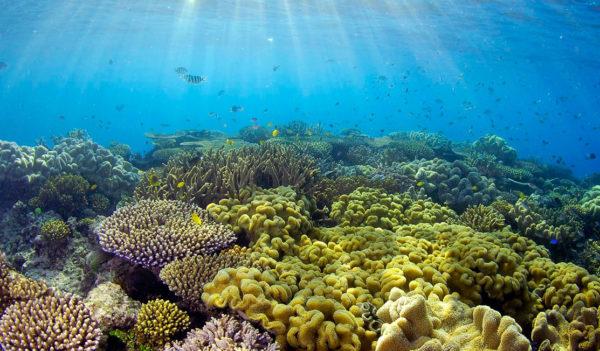 reef-healthy