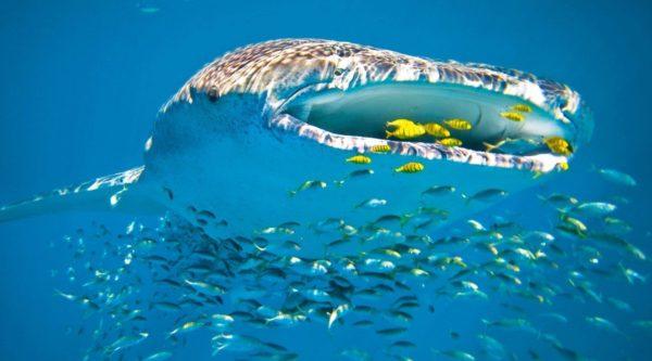 squalo balena 2