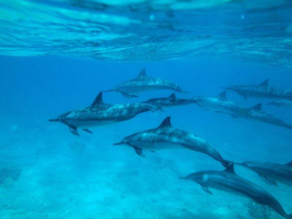 pod-of-dolphins-backdrop_t20_WQeYgX